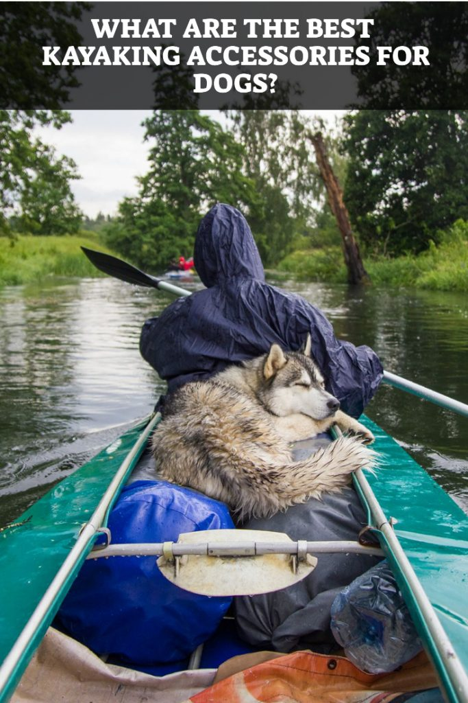 Best Kayaking Accessories For Dogs