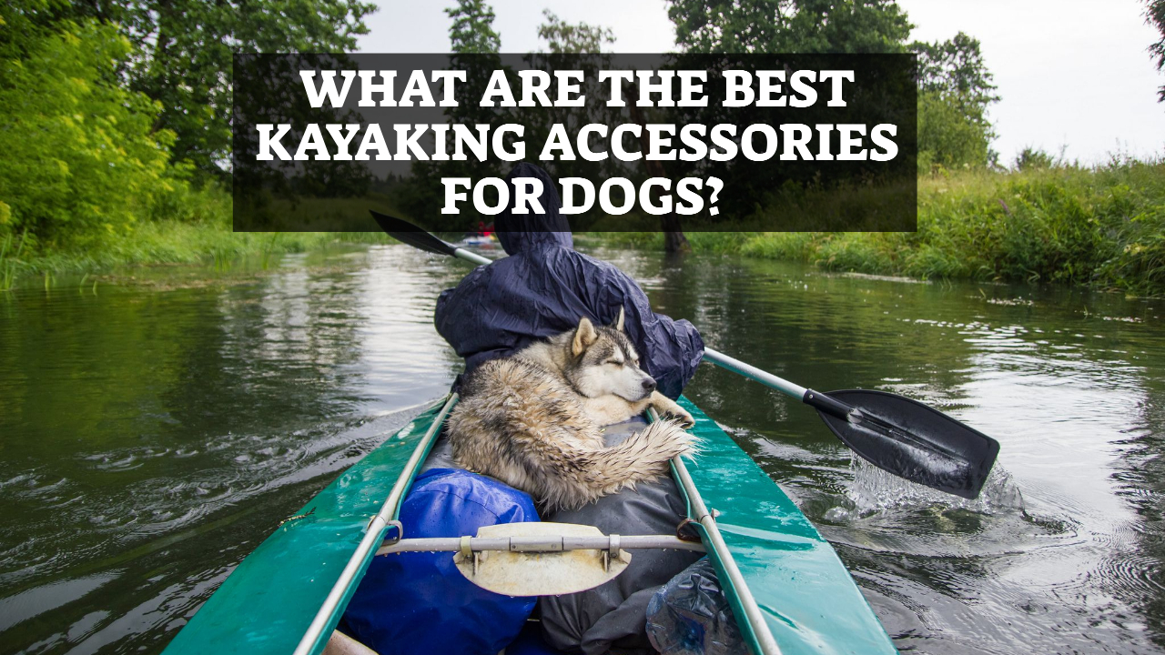 What Are The Best Kayaking Accessories For Dogs